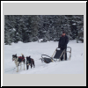 Jim on Dog Sled